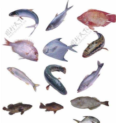 高清海鱼素材图片