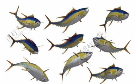 吞拿鱼素材图片