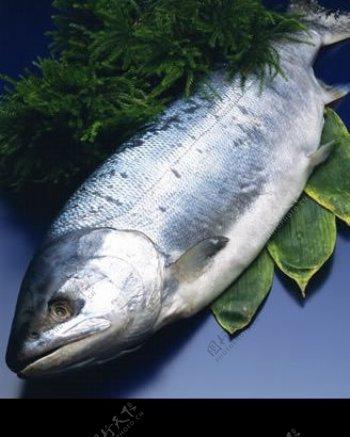 三文鱼素材图片