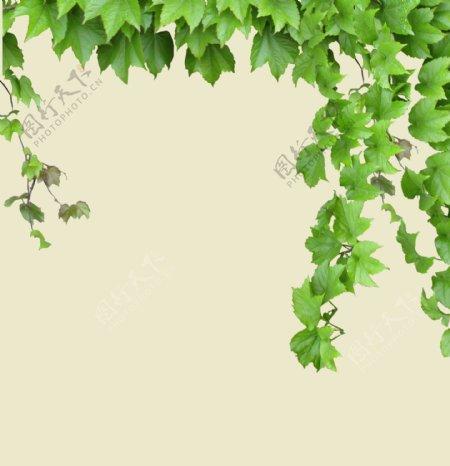 叶子叶子叶子