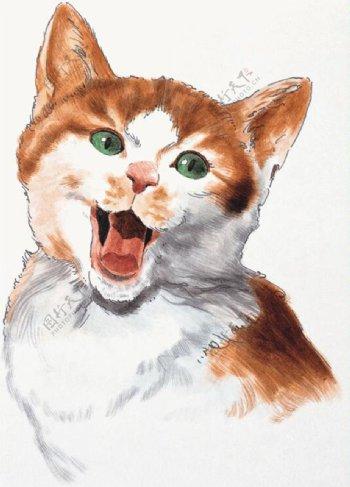 猫家禽家畜动物插图22