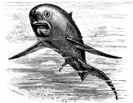 水生动物Fish鱼动物素描