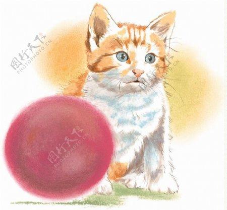 猫家禽家畜动物插图23