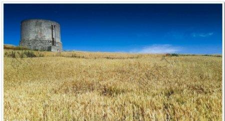 灌溉麦田小水库