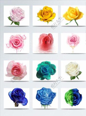 黄玫瑰蓝玫瑰红玫瑰花朵元素