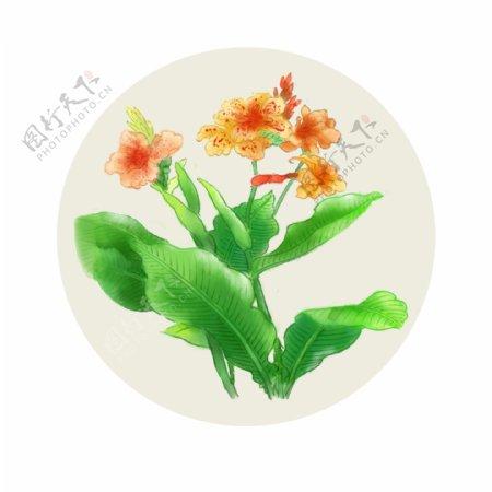 手绘植物花卉虞美人
