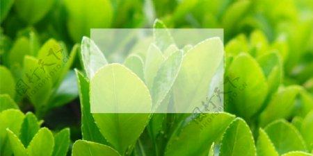 绿色网站背景图