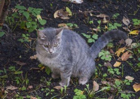 猫动物基蒂小猫毛皮可