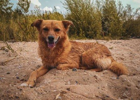 狗海滩湖夏季可爱毛皮