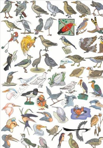 矢量手绘鸟类