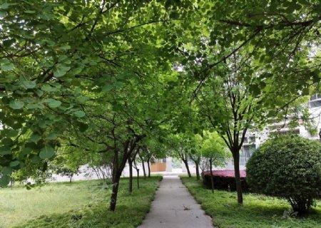 绿荫下的小楼道