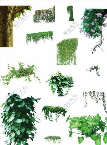 树叶枝条藤蔓