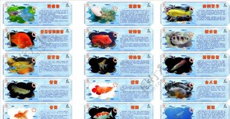 海洋生物简介海洋鱼鱼