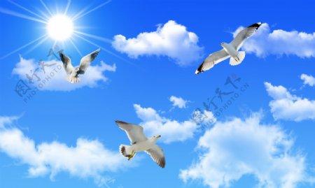 蓝天白云白鸽