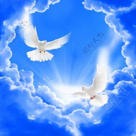 蓝天白鸽背景墙