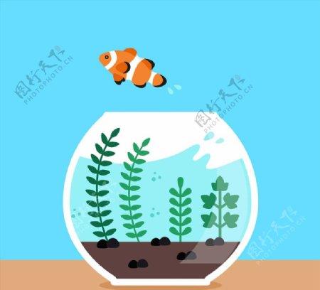 跳出鱼缸的小丑鱼图片