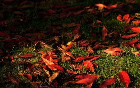 红色落叶平铺图片
