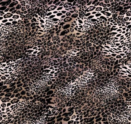 数码豹纹大牌印花爆款图片