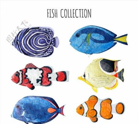 水彩绘鱼类图片