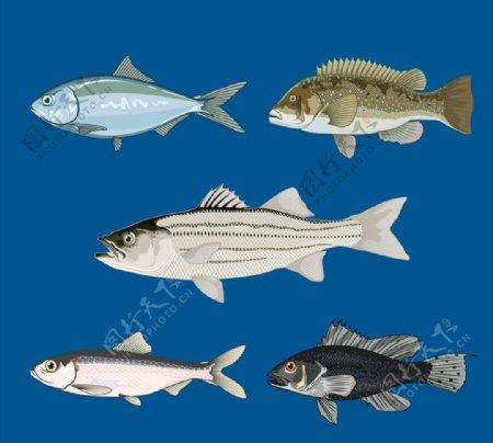 逼真鱼类侧面图片