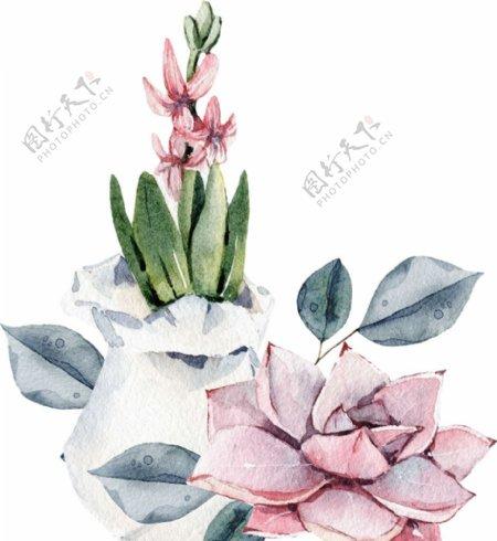 水彩多肉植物png素材图片