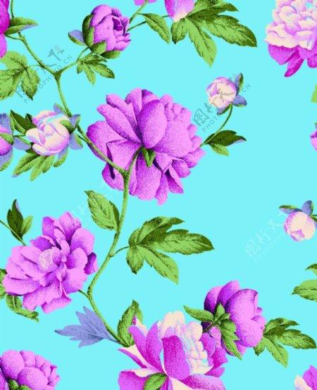 大朵牡丹玫瑰月季花图片