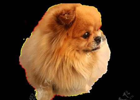 透明可爱小狗素材狗犬家畜宠物图片