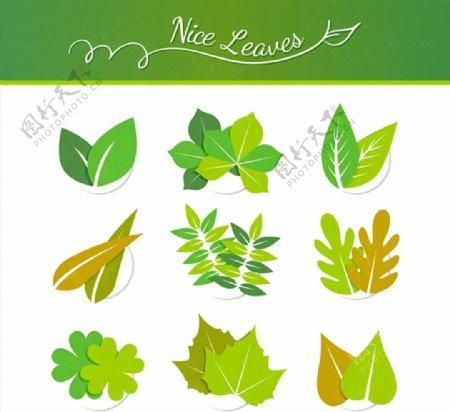 精致树叶设计图片