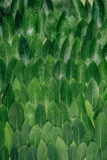 树叶平铺背景图片