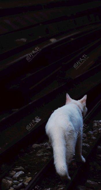 和优雅白猫擦身而过怀旧记录摄影图片