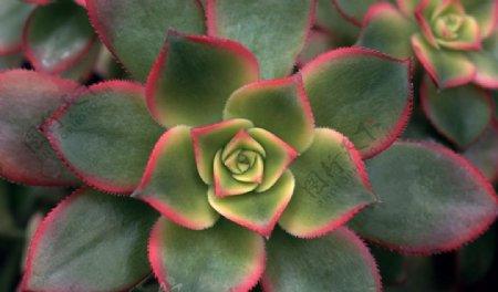 绿色花瓣的鲜花图片