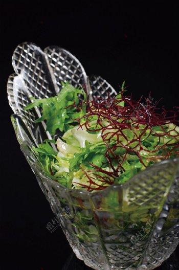 川菜珊瑚苦菊图片