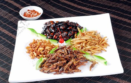 川菜营养昆虫拼图片