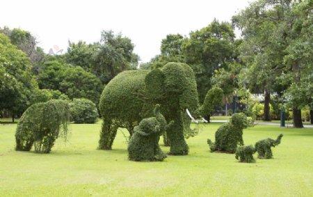 花园花圃图片