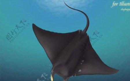 深海鳐鱼矢量图片