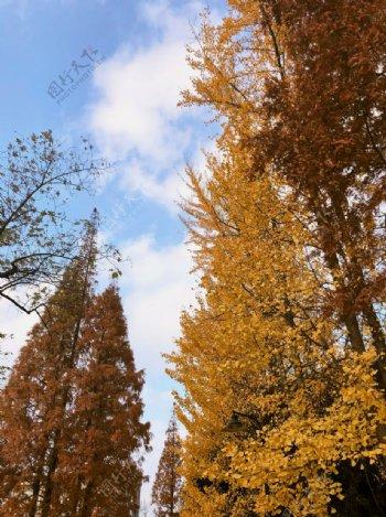 枫叶深秋树片片落叶图片