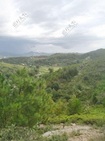 松树林图片