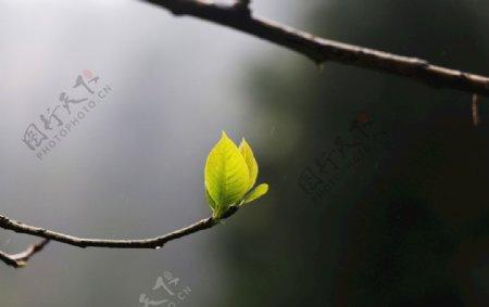 树木叶子春天图片