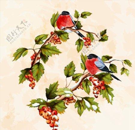 手绘小鸟与果实图片