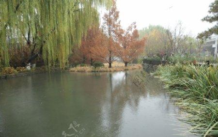 柳树红叶碧水图片