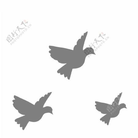 灰色的鸽子免抠图动植物元素图片