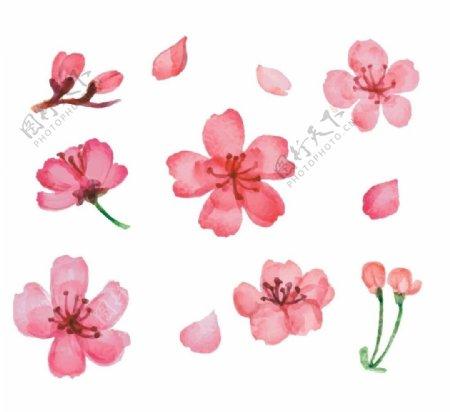 11款粉色樱花矢量素材图片