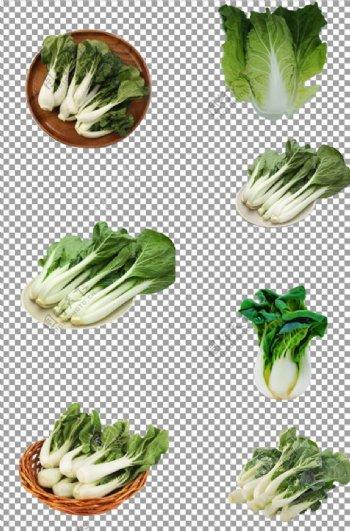 天然有机蔬菜奶白菜图片