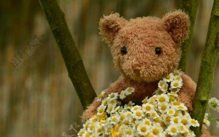 可爱的玩具毛熊图片