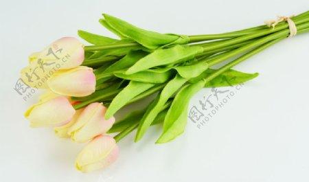 黄色郁金香花束特写图片