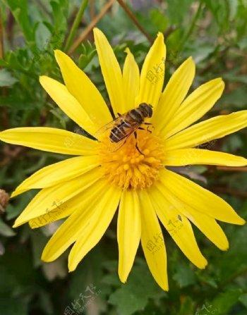 花儿与蜜蜂图片
