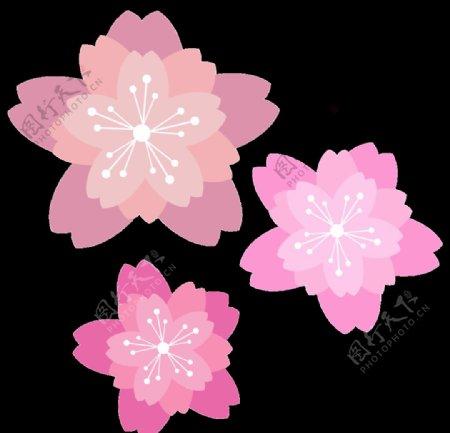 桃花樱花图片