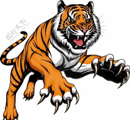 大老虎图片
