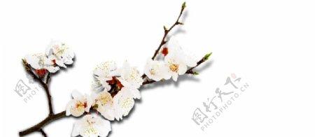 花矢量花小碎花图片
