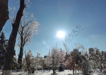 阳光下雪景图片